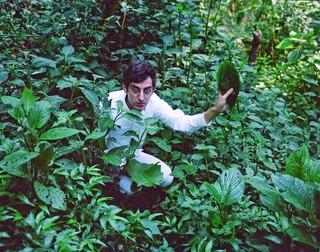 Morris en train de cueillir des feuilles de Salvia Divinorum.