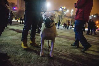 Câine la protest, Zven