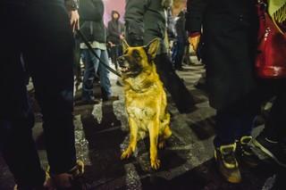 Câine la protest zambet