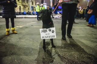 Câine la protest serios