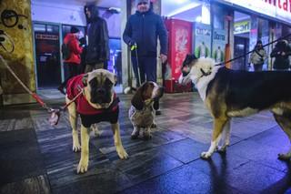 Câine la protest buimac