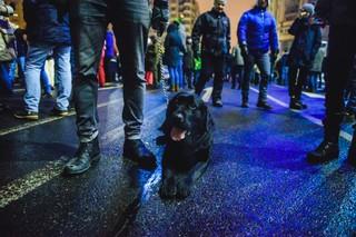 Câine la protest negru