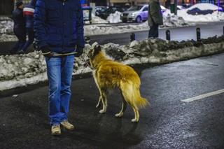 Câine la protest vulpe