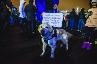 Câine la protest alb