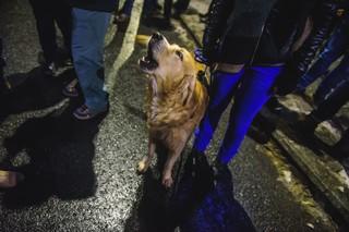 Câine la protest vocal