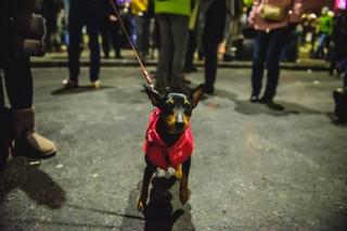 Câine infiltrat la protest.
