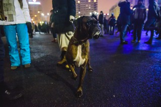 Câine alert la protest.