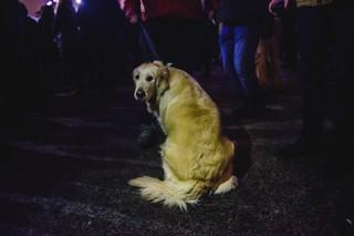 Câine care-ti intoarce spatele la protest