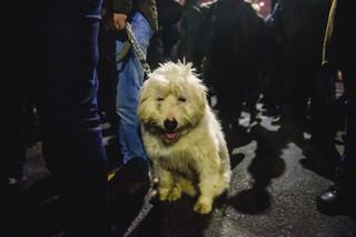 Câine beat la proteste.