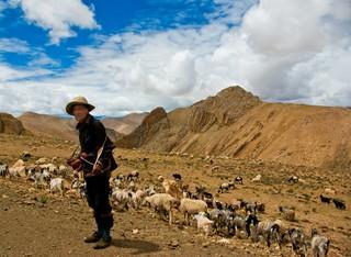 Tibetaanse hoogvlakte
