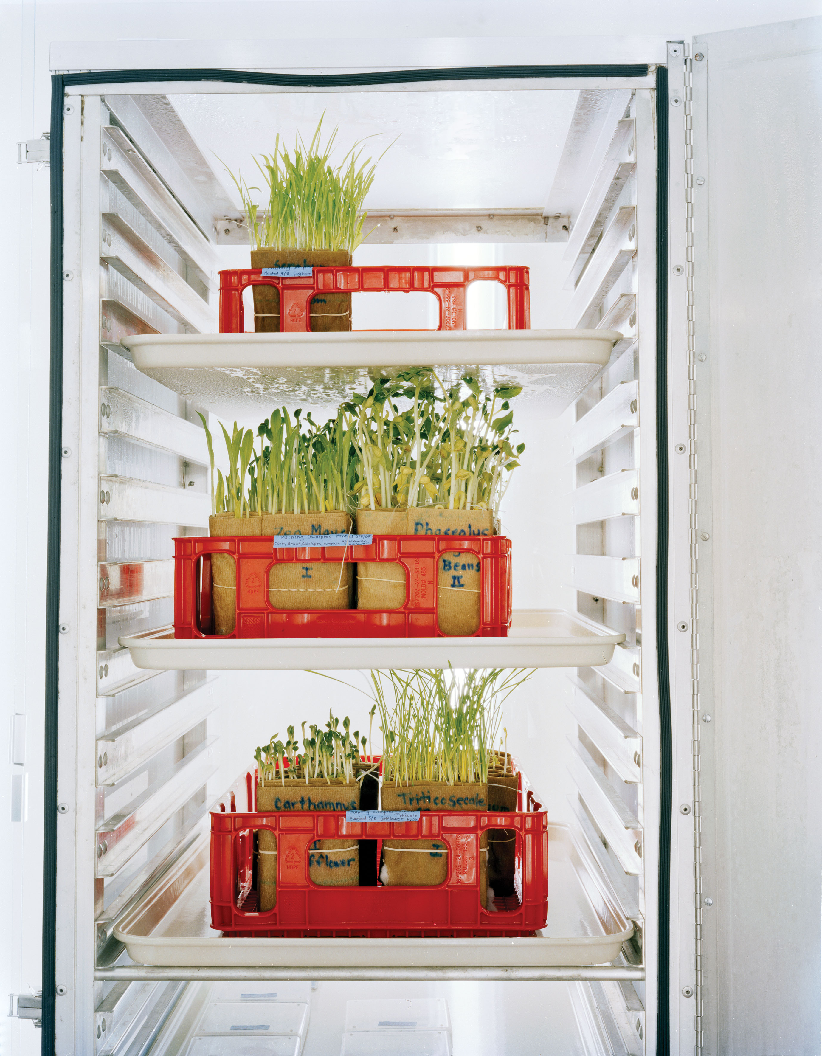 These Are The Seed Banks From Around The World That Will