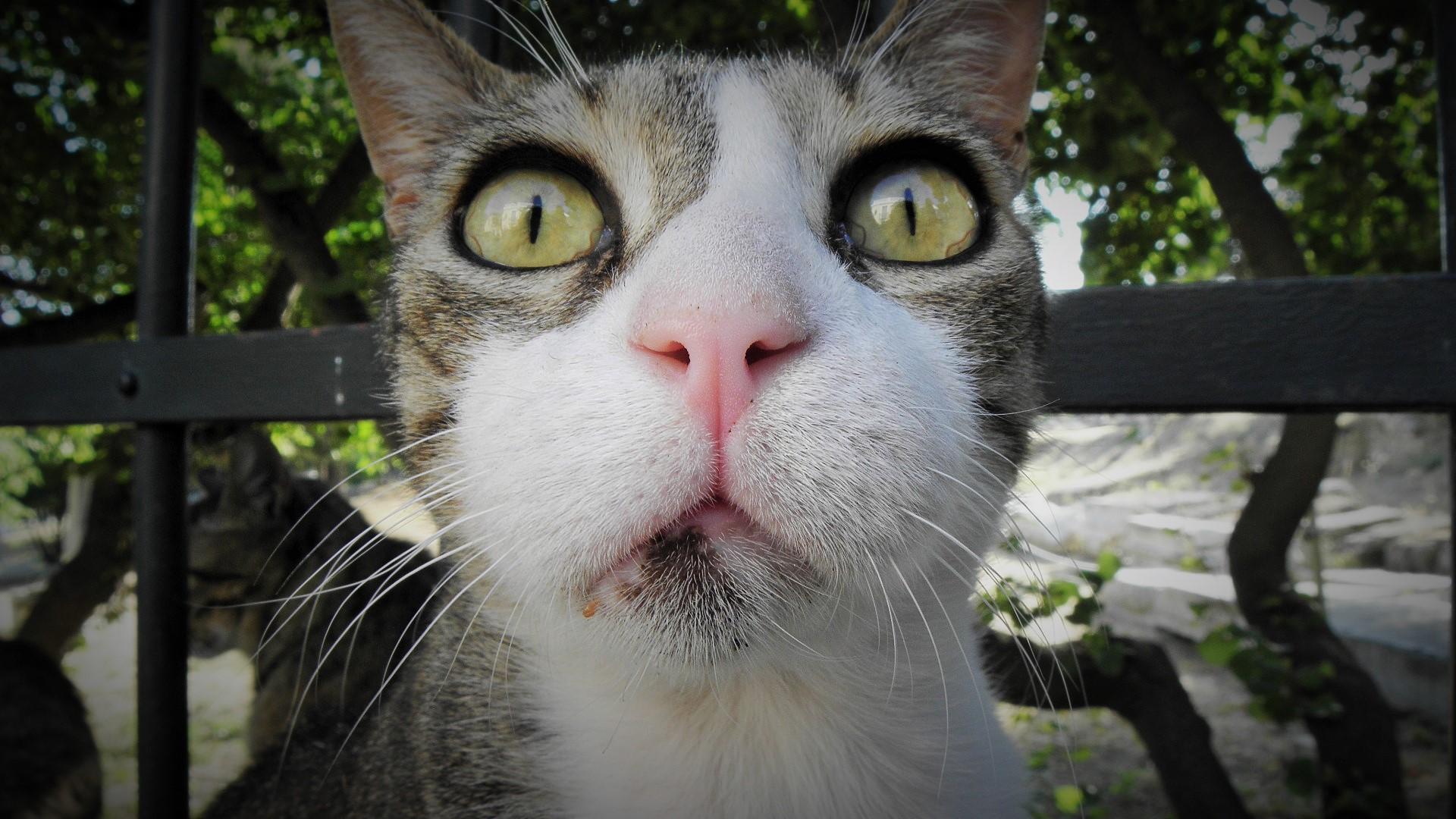 e47e8c3e4f22 Αυτό σημαίνει πως όσοι δεν συμπαθούν τις γάτες χρησιμοποιώντας το  επιχείρημα πως δεν εκπαιδεύονται ή πως είναι αντικοινωνικές