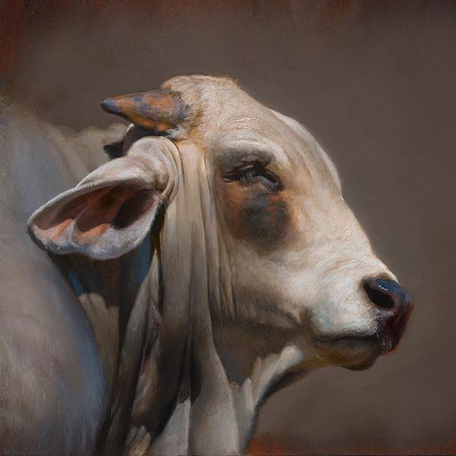 Pinturas al óleo inmortalizan la belleza de las vacas - Creators