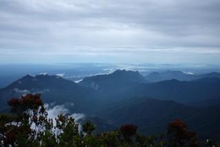 Pengalamanku Tersesat Dua Minggu di Hutan Kalimantan - VICE
