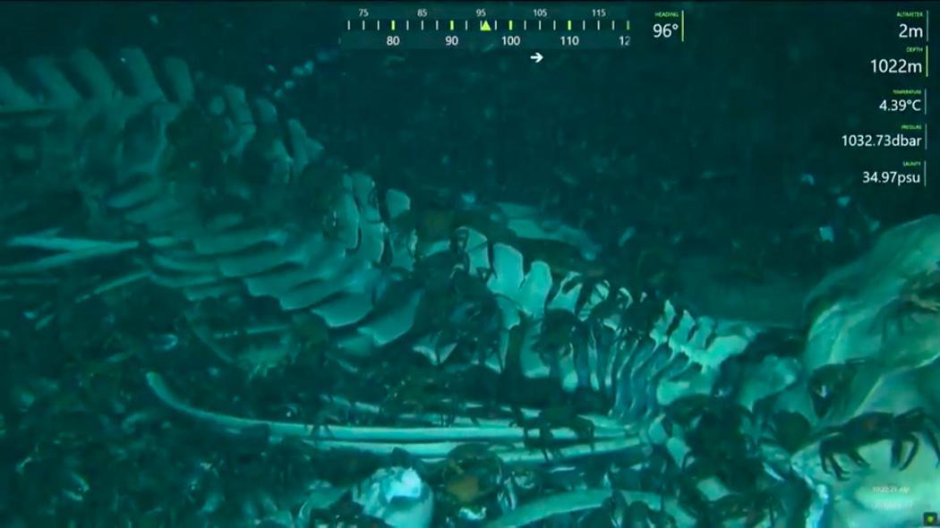 Este robô transmite as coisas muito doidas encontradas nas profundezas do oceano
