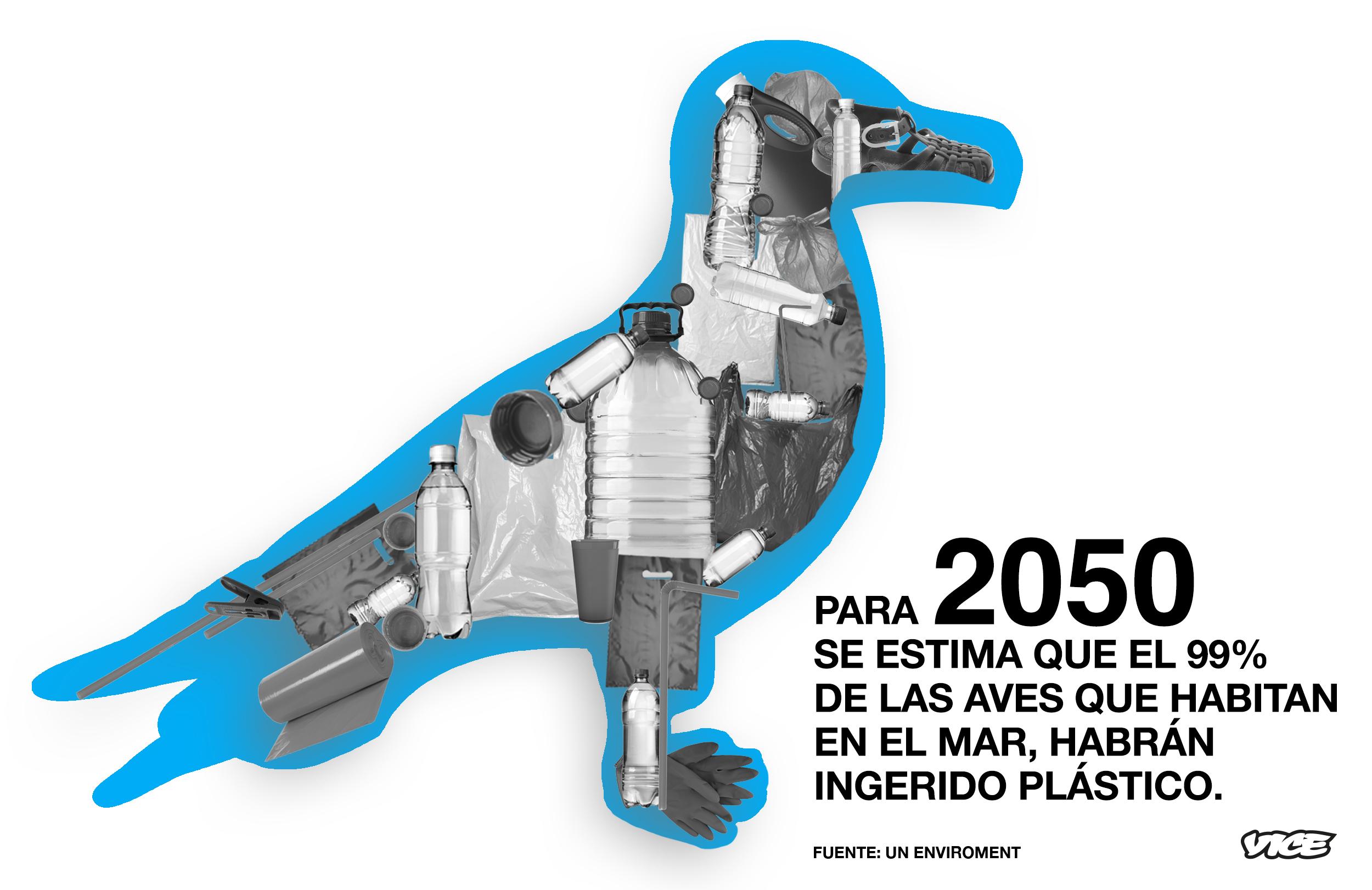 Mariscos aderezados con pl stico as responde el oc ano for Plasticos para estanques de agua