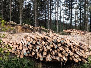 1496046203820-kawerau-logs