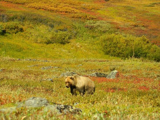 wild nackte frauen in alaska