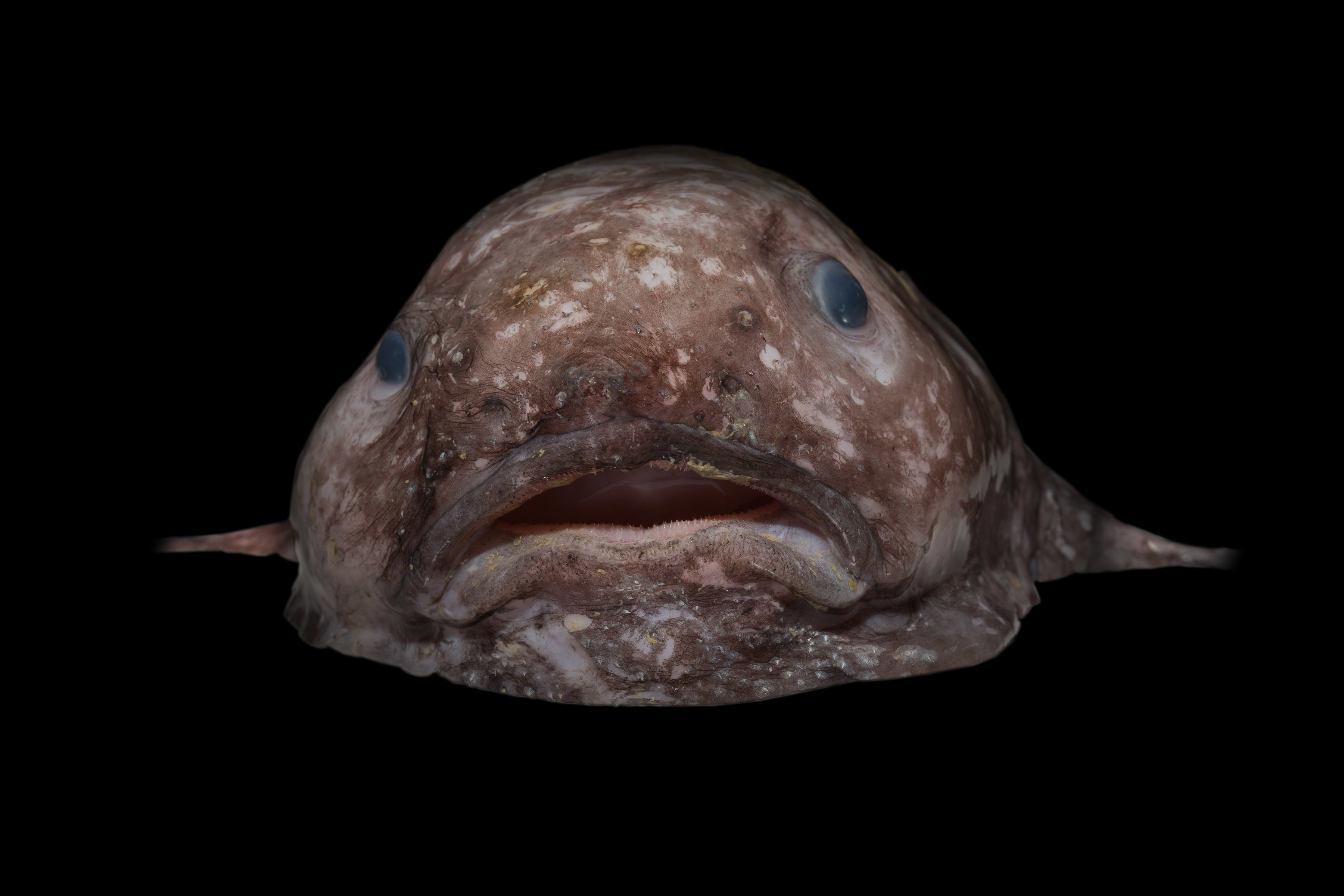 Meet Some of the Insane Creatures Found in the Deep Sea - Creators for Cute Deep Sea Creatures  104xkb