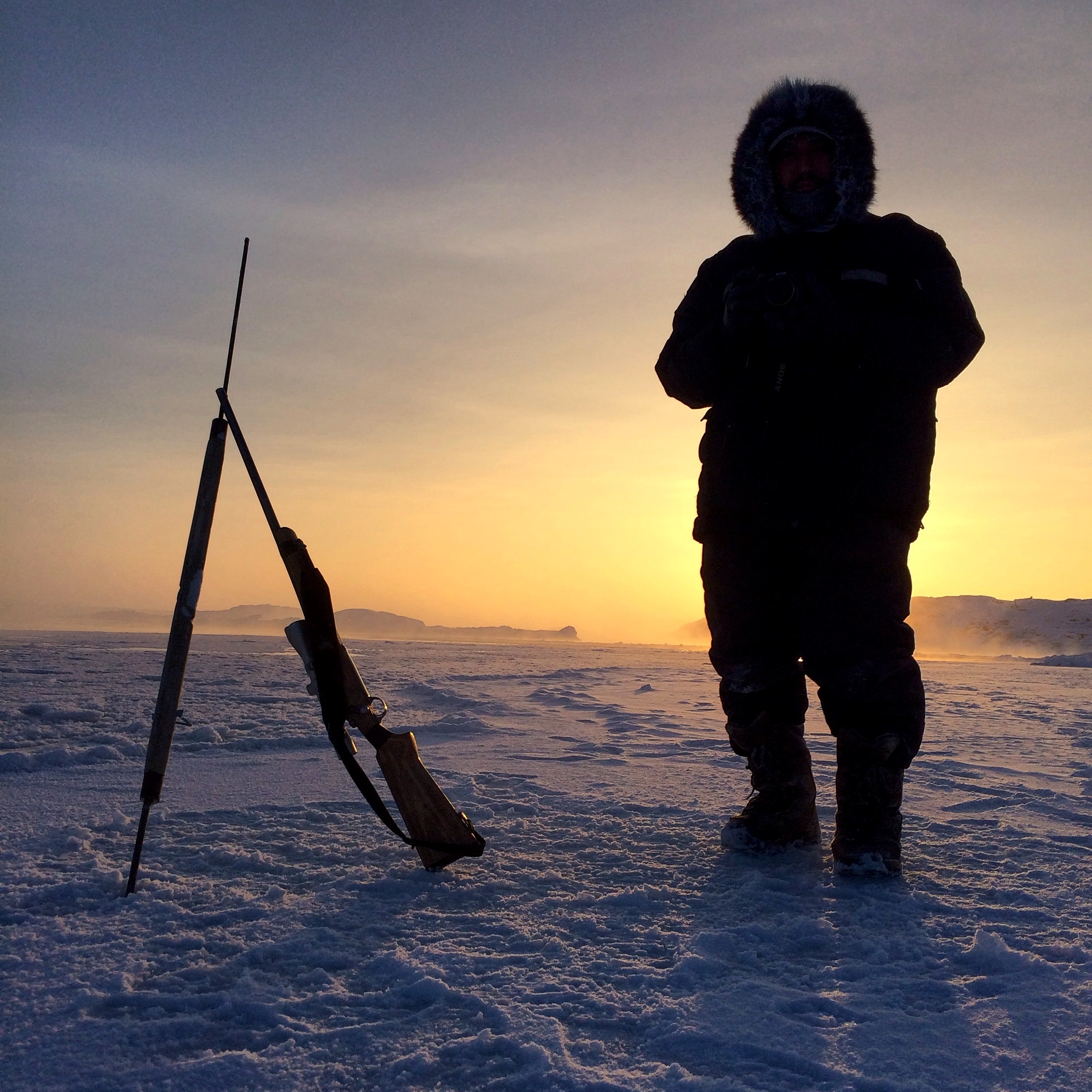 essay about seal hunting