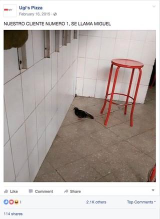 1498774811676-16Miguel-Pigeon__x