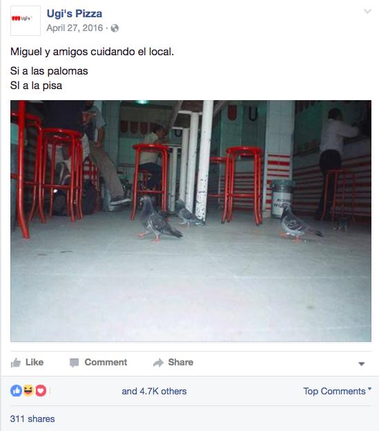1498774820735-17Miguel-Pigeon2__x