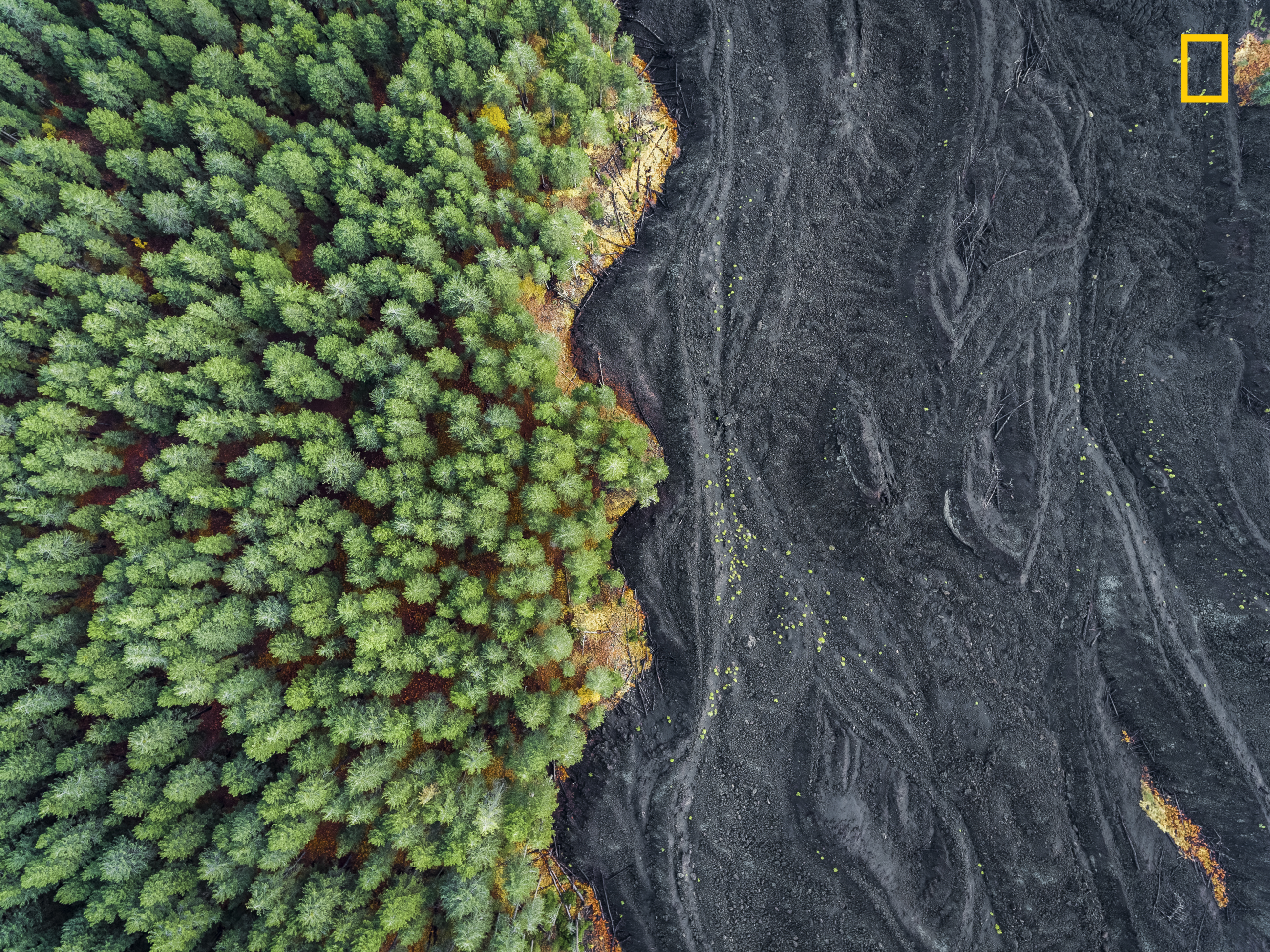 Photo And Caption By Placido Faranda National Geographic Travel Photographer Of The Year Contest Solidified Lava Vs Forest I Shot This Picture In Sicily