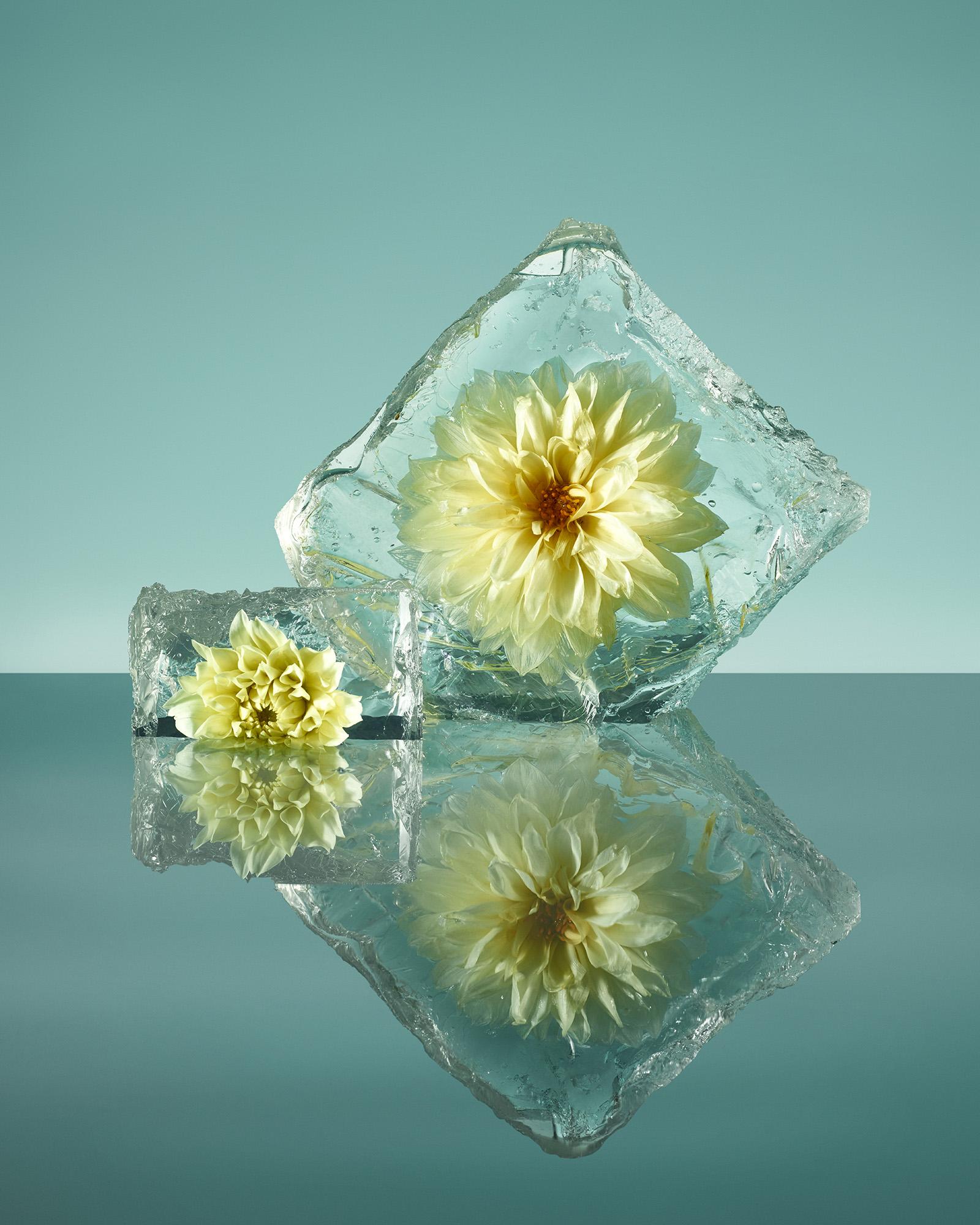 Frozen Flower Arrangements Are Insta Cool Summer Creations Creators