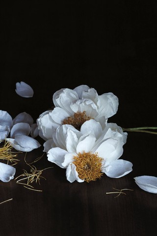 These Incredibly Realistic Flowers Are Actually Made Of Paper Vice