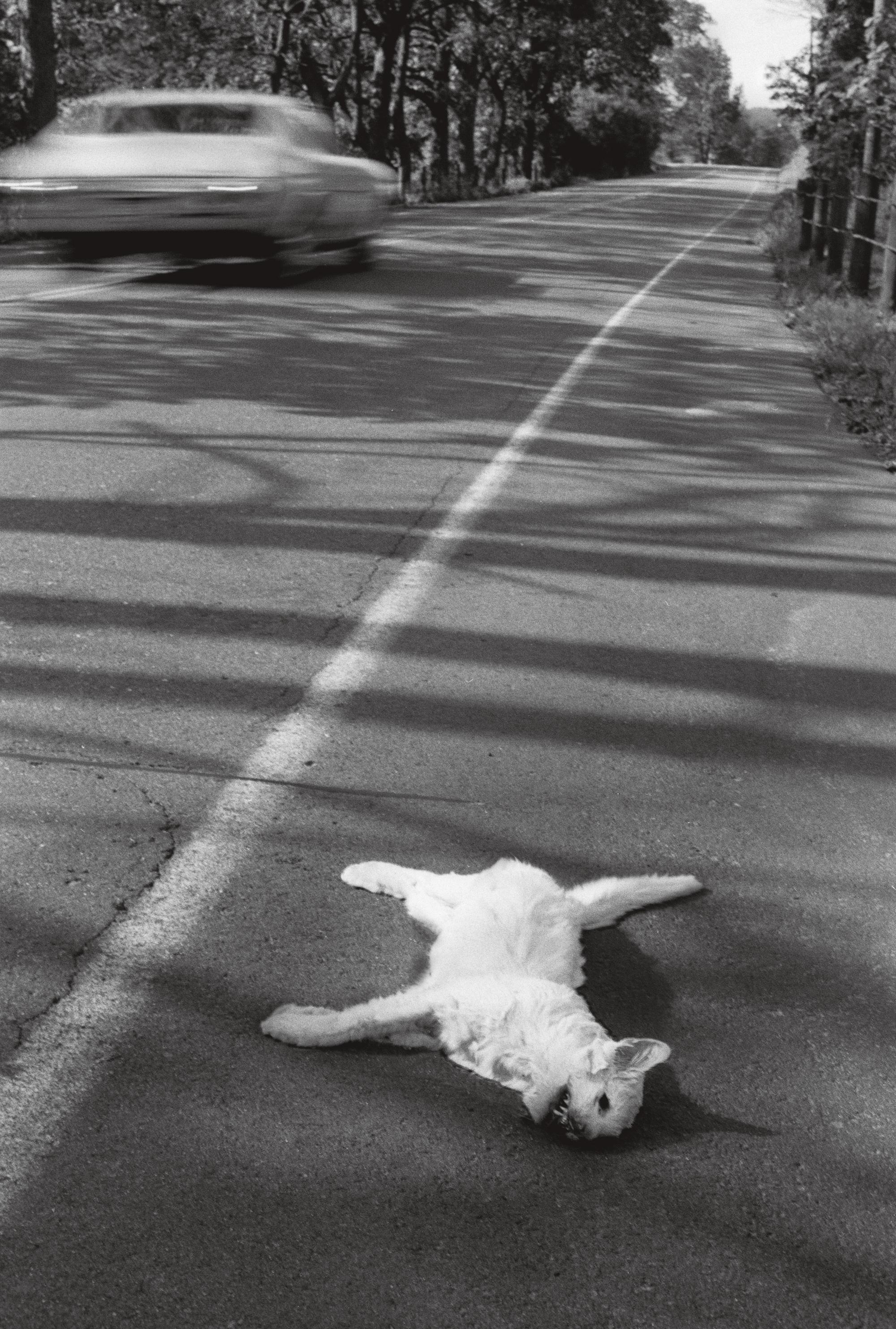 Фотографии, найденные в кошмарном архиве Роджера Баллена