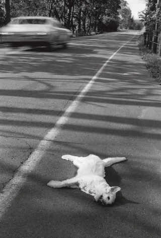 Roger Ballen fotos dead cat