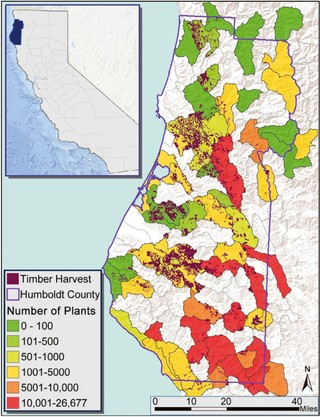 Marijuana Growing Areas California Map.Illegal Weed Can Be Worse For Forests Than Logging Vice