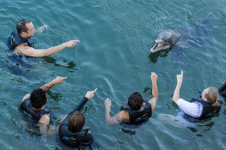 1510002415520-Bottle-Nosed-Dolphin-USA-2012-Credit-Jo-Anne-McArthur