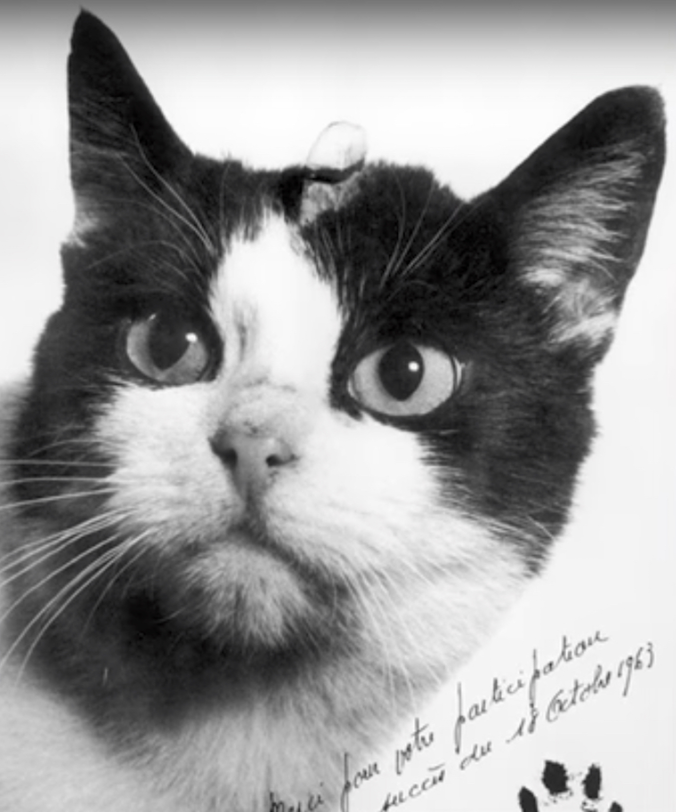 Animal Cat Video Porn people want to erect a statue honoring the forgotten first