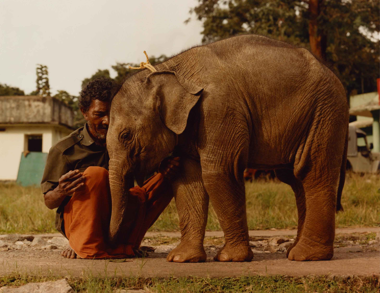 The Elephant Family Book