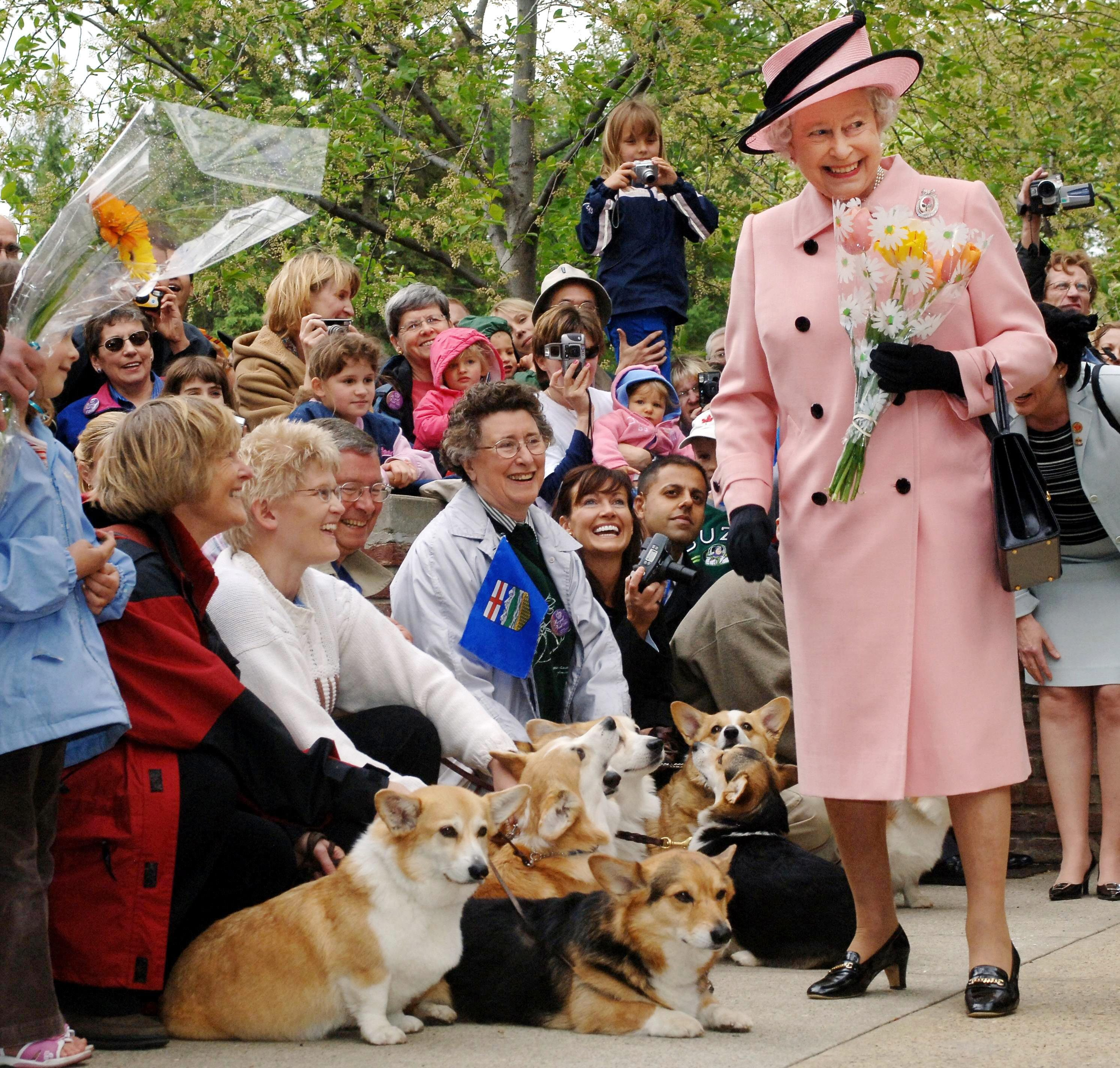 Corgi Queen Elizabeth
