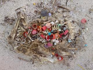 Ein toter Vogel voller Plastik