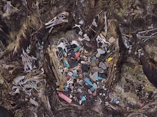 Plastik im Magen eines toten Vogels