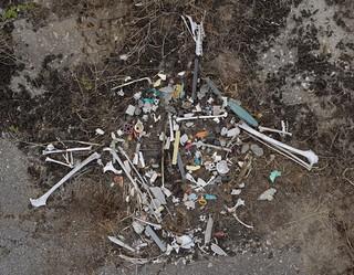 Plastik und Vogelknochen