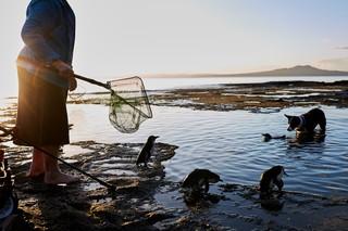 Mit einem Kescher in der Hand steht Sylvia Durrant am Ufer und sieht zu, wie Pinguine von ihrem Hund bewacht schwimmen