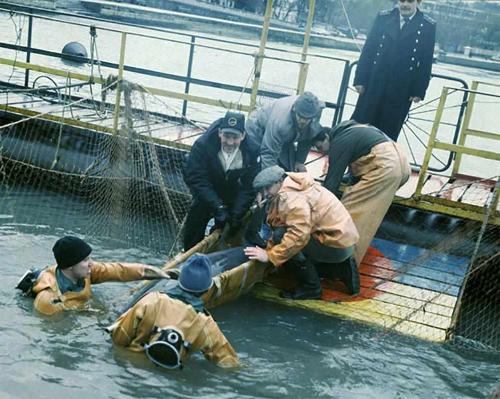 Lumba-lumba Militer Ukraina Dikabarkan Mati Kelaparan