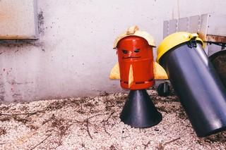 Eine Raketenbohne im Redaktionsgarten von Rocket Beans TV