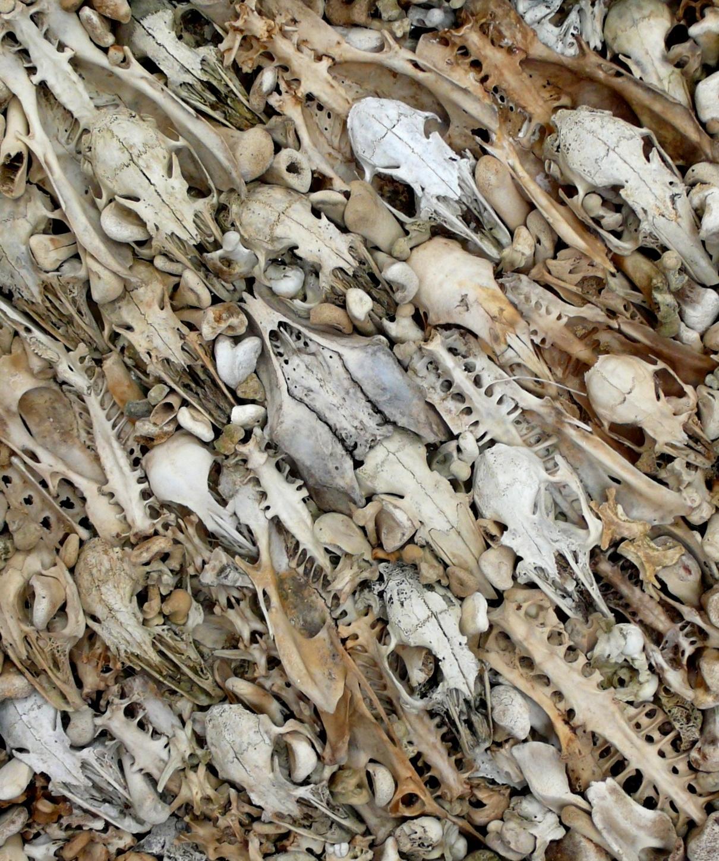 4732da657399 Νεκροκεφαλές Ανθρώπων και Ζώων σε Ένα Art Mix - VICE