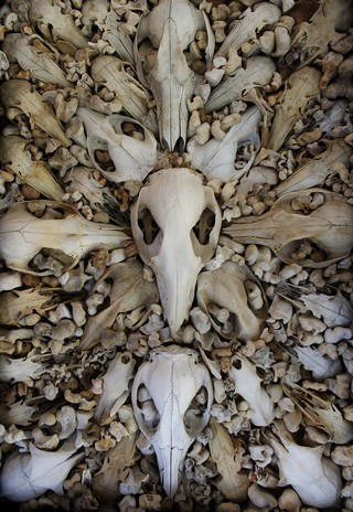This Art Made from Human Bones Will Make You Rethink Your