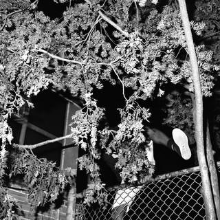 Ein Mann klettert über den Baum zum Schwimmbad.
