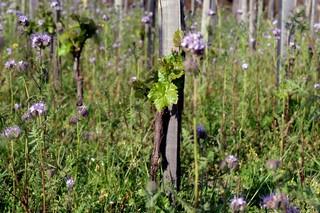vigna vino naturale