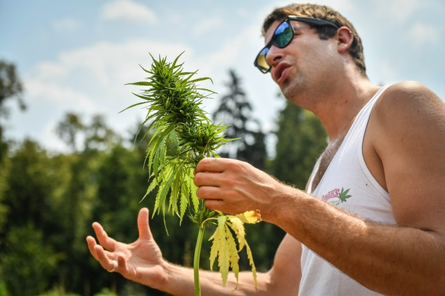 A Tour of Germany's First Pick-Your-Own-Plant Hemp Farm - VICE