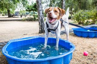 perros aguantando la ola de calor
