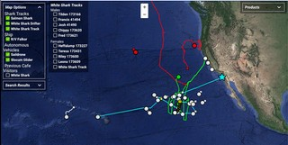 Screenshot mit Aufzeichnungen der Hai-Bewegungen