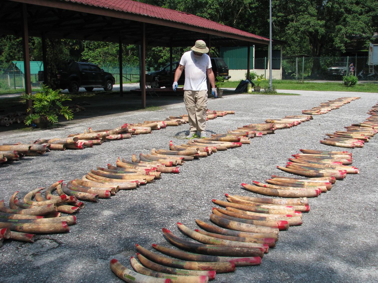 ДНК-криминалистика помогает властям ловить картели контрабандистов слоновой кости